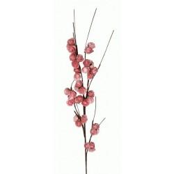 Λουλούδι με ρόζ ανθάκι Espiel